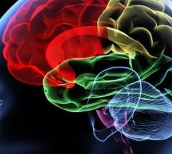 Brain iStock 640