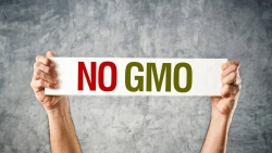 GMOs are killing us, filling our food supply with unnatural sustenance and prompting toxic glyphosate to be sprayed on our food and make its way into our soil, air and water while the FDA looks the other wa