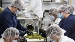 The world's largest cannabis company by market value loses millions