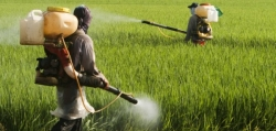 Food Consumers continue to eat Cancer-linked weed killer Chemicals